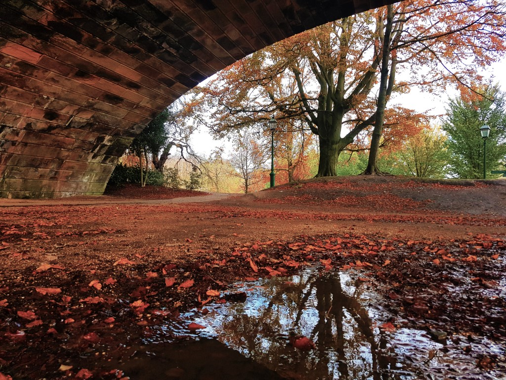 Alfie Ryott - A puddle on the ground reflecting the underside of a bridge and trees