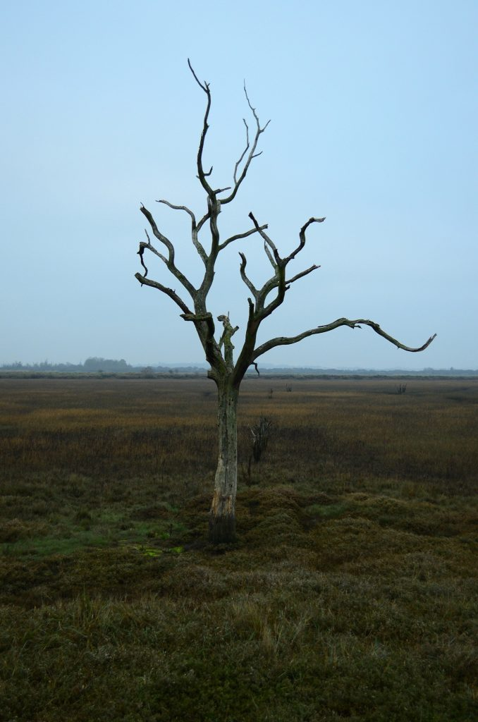 Hollie Skinner - A dead tree with twisted branches on an open field against a pale grey sky