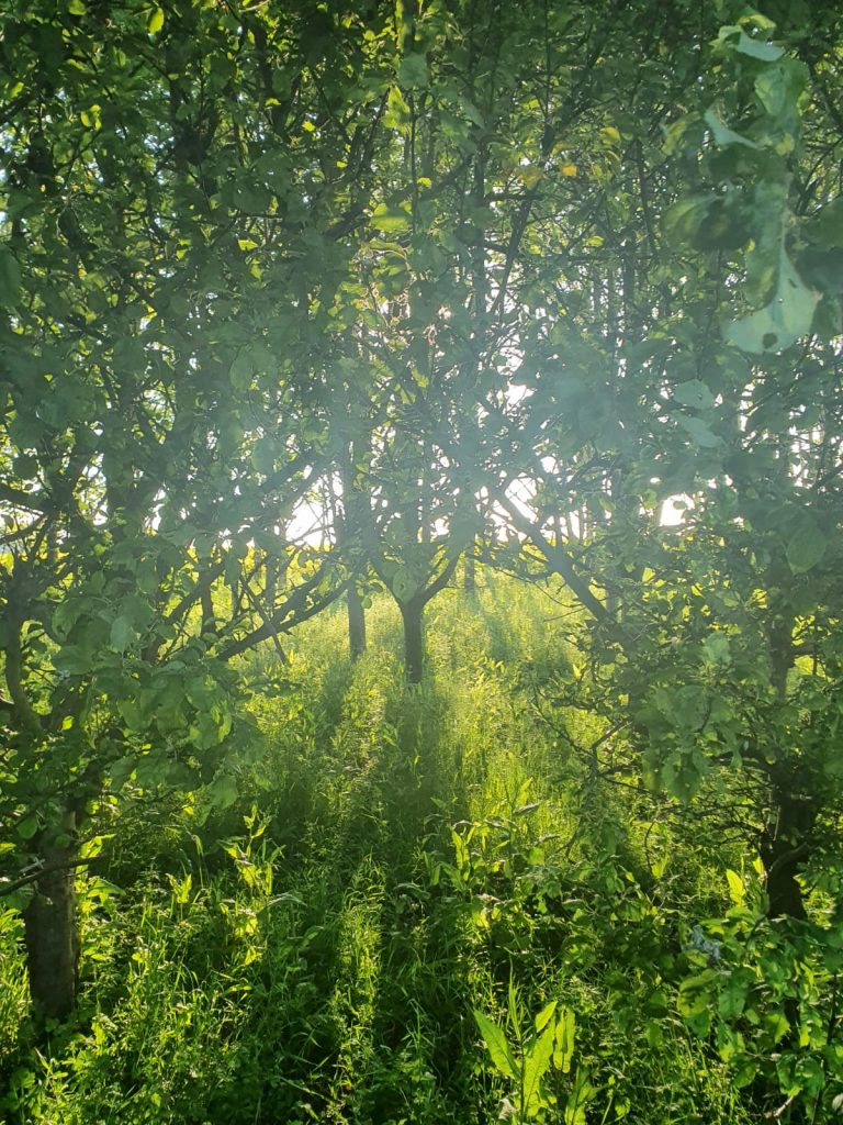 Rebecca O'Brien - Green trees in green grass, with sun streaming through the trees